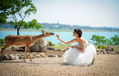 Bride feeding Deer